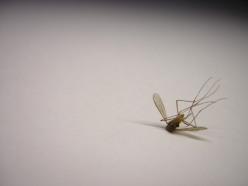 mosquito-1-1549195-640x480