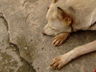 lonely-dog-1391902-640x480